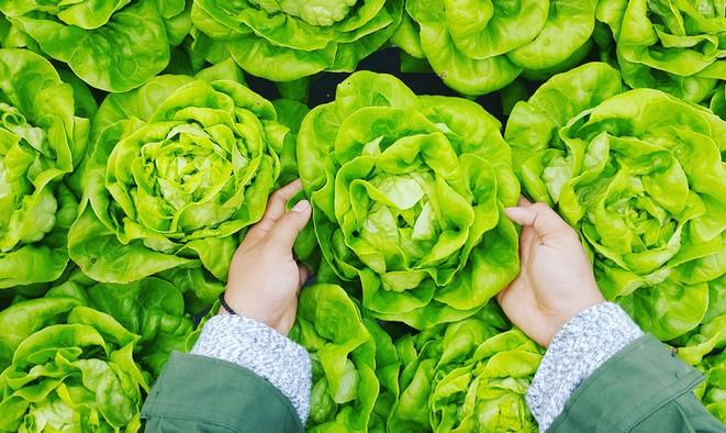4 jednoduchá pravidla, jak na zdravé stravování - WUGI blog